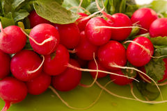 Close up view of fresh red radishes. From the garden Stock Photography