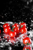 Close-up view of fresh ripe tomatoes with water drops isolated on black. Harvest vegetables concept Stock Photos