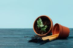 Close up view of gardening equipment and flowerpots on wooden tabletop. On blue royalty free stock photography
