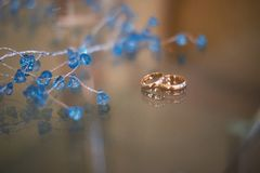 Close-up view of golden wedding rings and beautiful small blue flowers. On wooden tabletop Royalty Free Stock Image