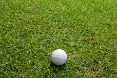Golf ball on green grass Royalty Free Stock Photos