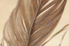 Close Up View Gray Feather Royalty Free Stock Photos