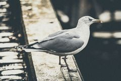 Close Up View of Gray and White Bird Stock Photography
