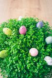 Close up of a green baby`s tears plant with colorful dotted quail Easter eggs decorations over a wooden background stock photo