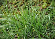 Close up view of green grass royalty free stock photography