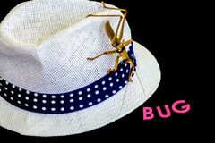 A close-up view of a green insect on white hat with blue strap in a black background.  Royalty Free Stock Photography