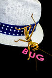 A close-up view of a green insect on white hat with blue strap in a black background.  Stock Photography
