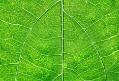 Close up view of green leaf Stock Images