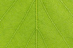 Close up view of green leave background Stock Photos