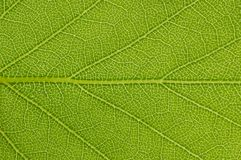 Close up view of green leave background Stock Photography