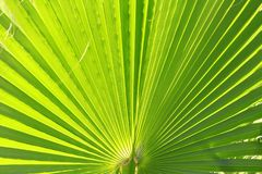 Close up view of green leave texture background Stock Photo