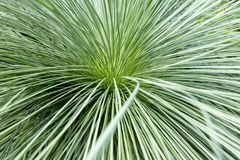 Green palm leave in garden royalty free stock images