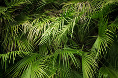 Close-up view of green palm tree leaf stock photo
