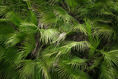 Close-up view of green palm tree leaf stock images