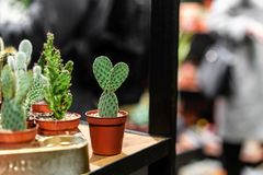 Close up view of green succulent in a clay pot in loft interior in scandinavian style.  royalty free stock photography