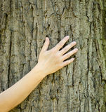 A close-up view of a hand touching the trunk and bark of a tree stock photos