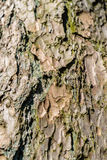 Close-up view of highly detailed tree bark Stock Images