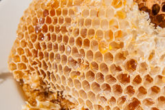 Close up view of the honeycomb with sweet honey. Stock Photography