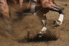 A close up view of a horse galloping. A horse in action running and kicking up dirt Royalty Free Stock Photography