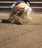 A close up view of a horse galloping. A horse in action running and kicking up dirt Stock Photo