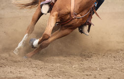 A close up view of a horse moving fast. A horse running and kicking up dirt Stock Image