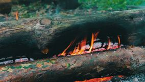 Close up view of a huge burning firewood or logs lie on the green and burn in the flames of fire in open air stock footage