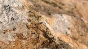 Close up view of insects on rock stock footage