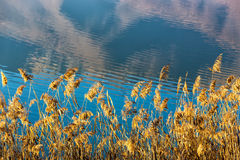 Close up View of Kerkini Lake in day light in Greece Stock Images