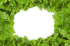 Close up view of lettuce in frame shape Royalty Free Stock Photo