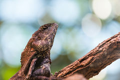 Close up view of lizard Stock Images