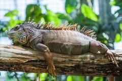 Close up view of lizard Stock Photos