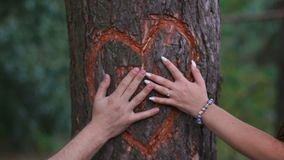 Close-up view of the loving couple touching each other hands at the carved heart with letters on the tree. No face. Close-up view of the loving couple touching stock video footage
