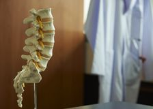 Close-up view of lumbar spine model. Close-up view of human lumbar spine model on the table in medical office. Stethoscope and reflex hammer in labcoat on stock images