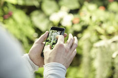 Close-up view man`s hands using a mobile phone, taking photo of trees flowers and scaling on screen. Stock Images