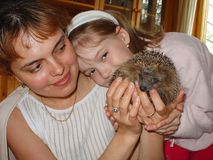 Close up view of a mother and daughter looking on cute hedgehog. royalty free stock image