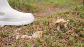 Close up view of mushroom in forest on ground. Person knocks off mushroom with white boot. Autumn forest in Russia stock footage