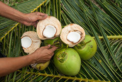 Close up view of nice fresh coconut Stock Photo