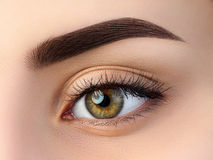 Free Close Up View Of Beautiful Brown Female Eye Royalty Free Stock Photos - 91616618
