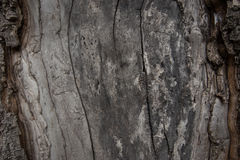Close Up View of Old Wood Texture Background. royalty free stock photo