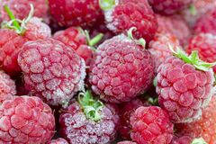 Free Close-up View On Frozen Fresh Raspberries On A Branch, Food Background. Selective Focus Royalty Free Stock Photography - 183961057