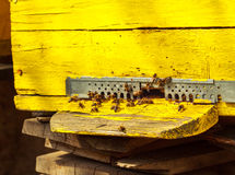 Close up view of the opened hive Stock Photo