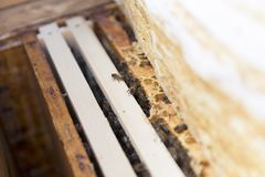Close up view of the opened hive body showing the frames populated by honey bees. Close up view of the opened hive body showing the frames populated by honey Stock Photography