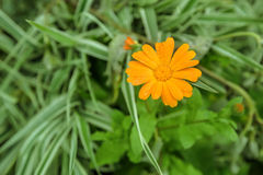 Close-up view of orange calendula flower stock photography