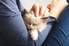 Close up view of owner with cute. Little kitten royalty free stock images