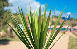 Close-up view of palm leaves. Royalty Free Stock Images