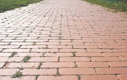 Close up view of pathway of red brick with small bushes of grass and sunlight in sunset stock image