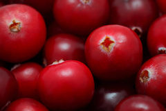 Close-up view on pile of cranberry Stock Photography