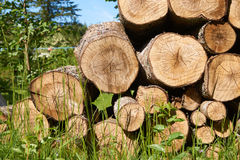Close up view of a pile of cut tree aspen trunks stacked up in a pile. Royalty Free Stock Photo