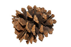 Close Up View of a Pine Cone Royalty Free Stock Image