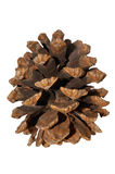 Close Up View of a Pine Cone Stock Images